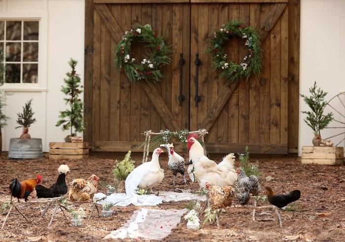 Mộng thấy gà đánh nhau trong đám cưới